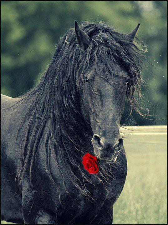 صور حصان - horse photos
